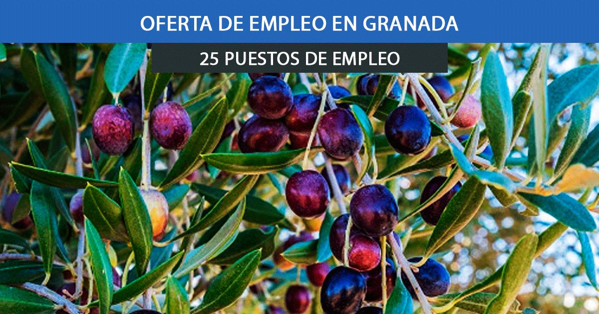 trabajar en Granada para la recogida de aceituna.