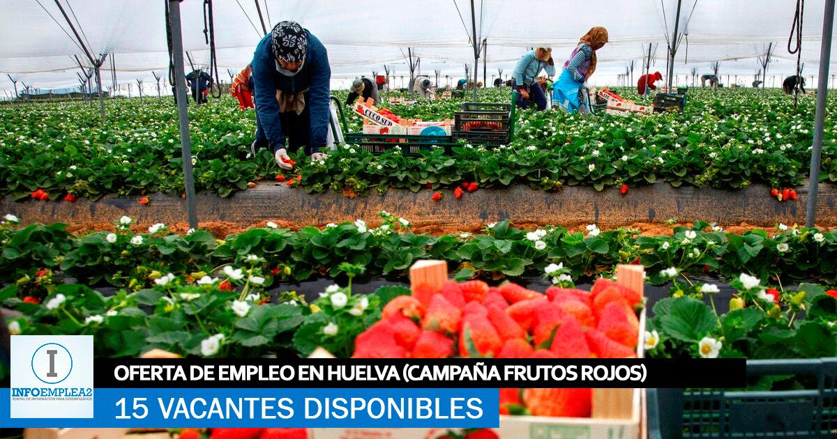 Se necesitan 15 Trabajadores en Huelva para la Recolección de Frutos Rojos