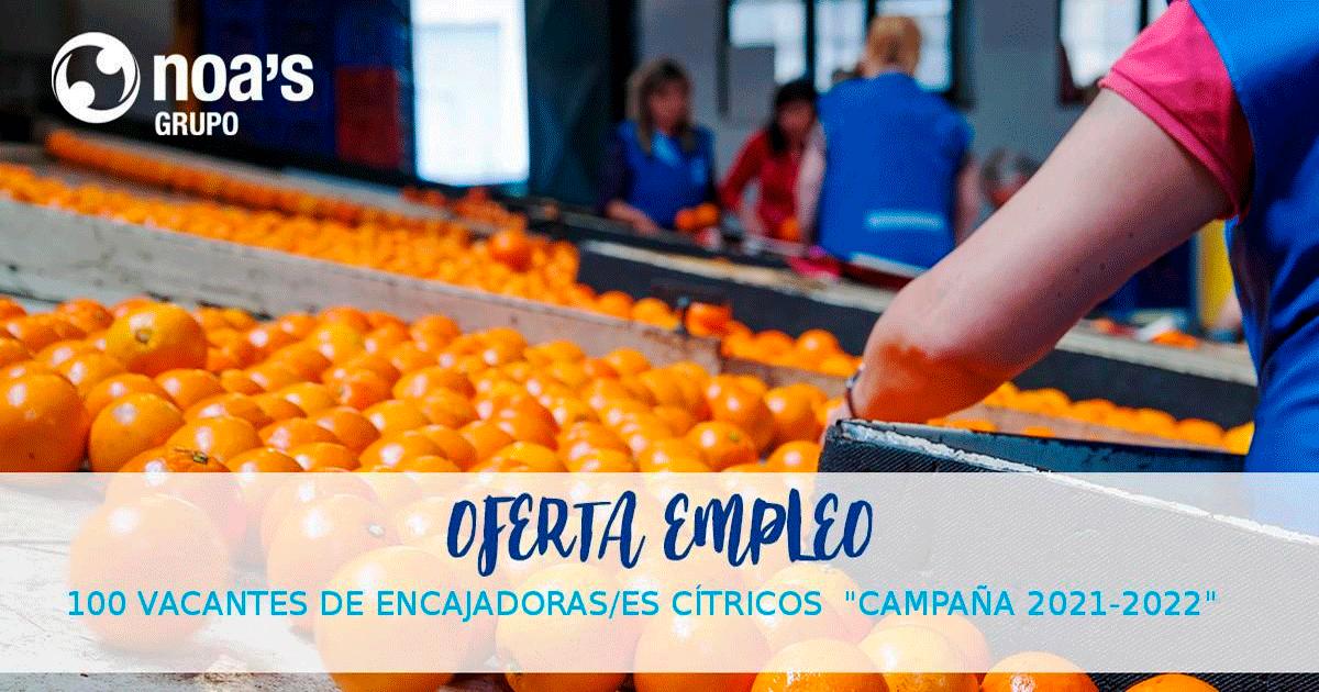 Se Necesitan 100 Personas para Trabajar en Envasadora de Cítricos en Chilches, Castellón