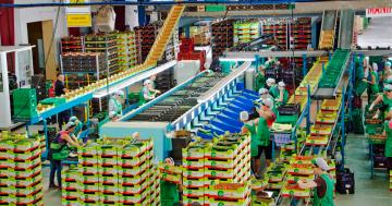Se Necesita Personal para Trabajar en Envasadora de Fruta y Verdura para esta Campaña Verano