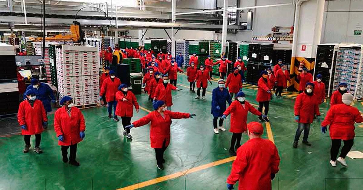 Se Necesitan 50 Personas en El Ejido (Almería) para Trabajar en Envasadora de Fruta