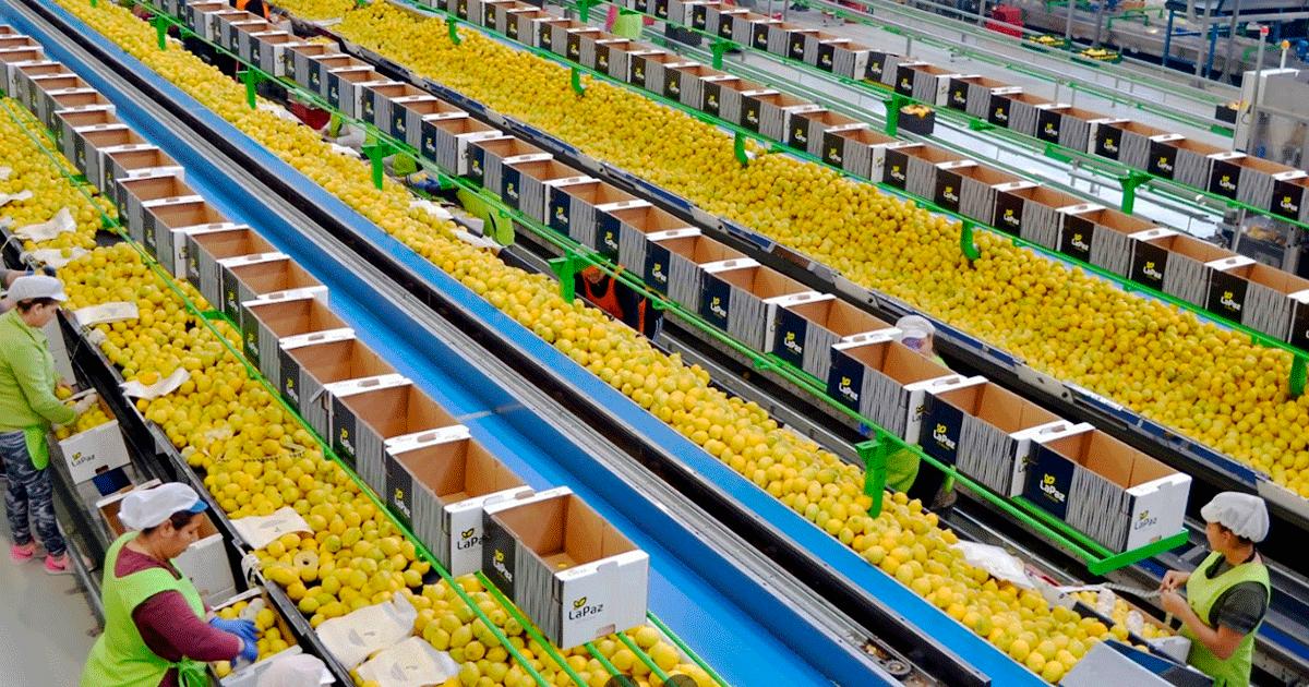 Se necesitan 5 Trabajadores en Fortuna (Murcia) para Envasadora de Cítricos