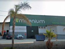 Están Buscando 50 Trabajadores para la Envasadora de Frutas Tropical Millenium en Vélez-Málaga