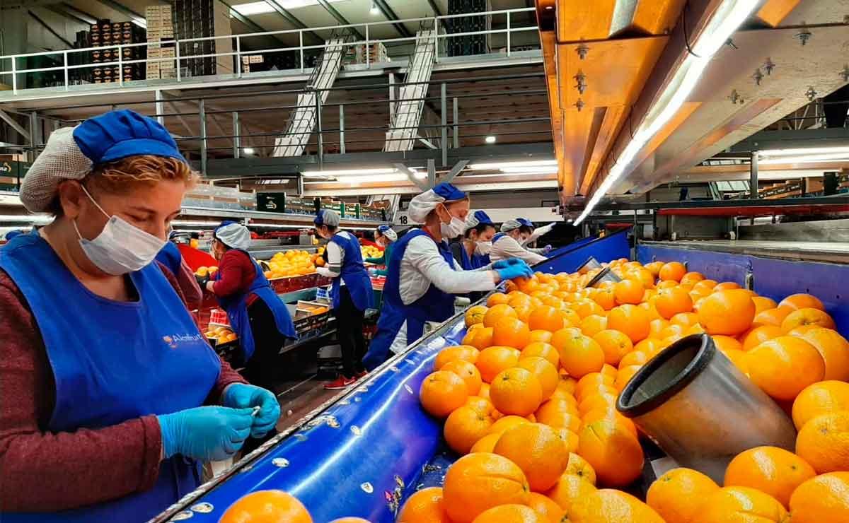 Empleo en Algemesí Naranjas